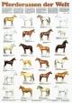 Pferderassen der Welt