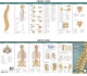 Anatomical Chart Company''s Illustrated Pocket Anatomy: The Vertebral Column & Spine Disorders Study Guide