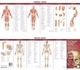 Anatomical Chart Company''s Illustrated Pocket Anatomy: The Muscular & Skeletal Systems Study Guide