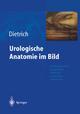 Urologische Anatomie im Bild