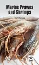 Marine Prawns and Shrimps