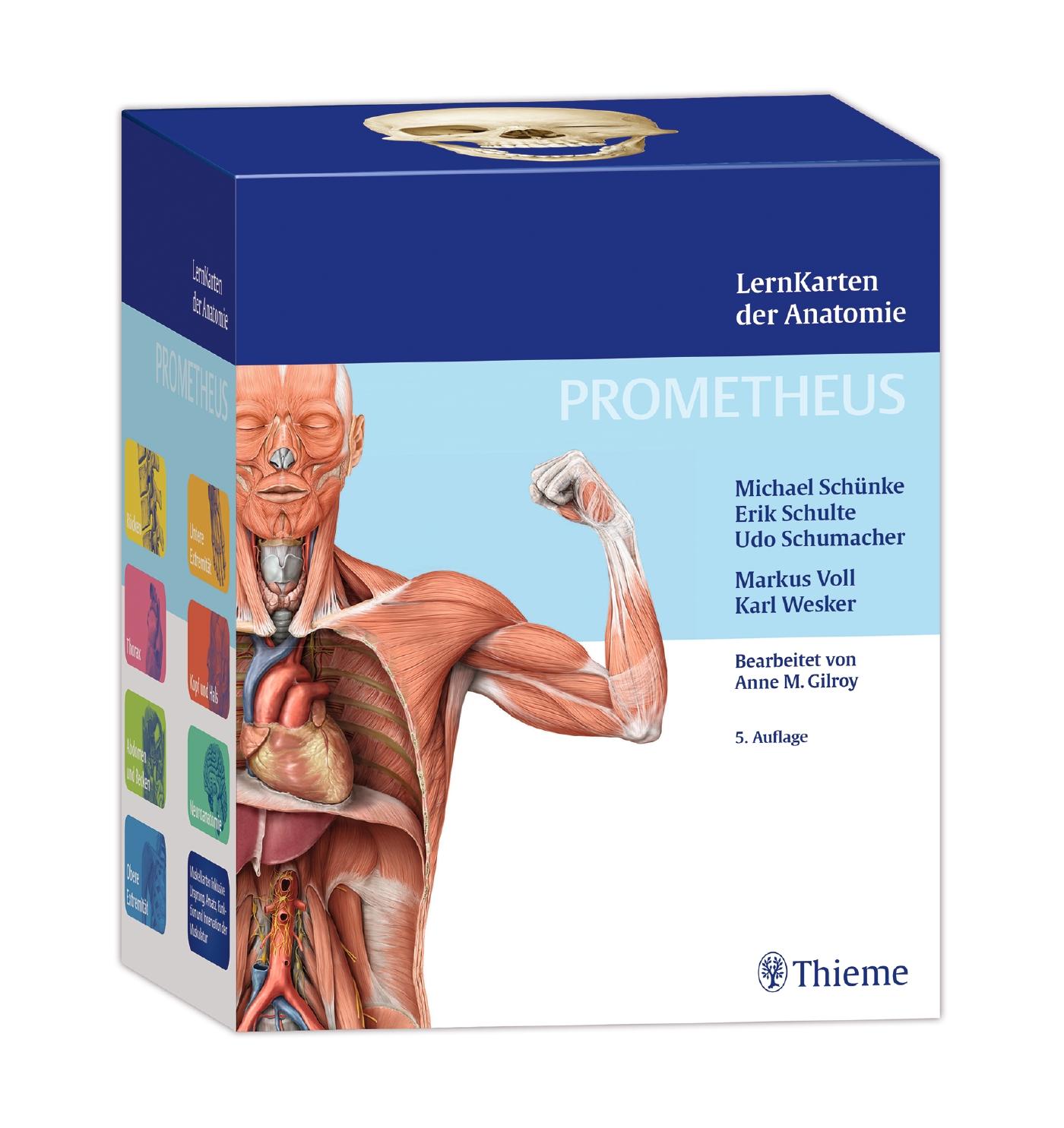 PROMETHEUS LernKarten der Anatomie von Erik Schulte | ISBN 978-3-13 ...