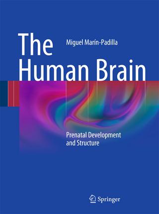 The Human Brain - Miguel Marín-Padilla