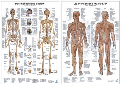 Doppelpack Anatomie-Poster | ISBN 978-3-8085-6871-2 | Bei Lehmanns ...