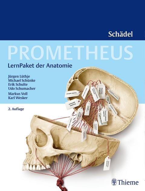 PROMETHEUS LernPaket Anatomie Schädel von Jürgen Lüthje | ISBN 978-3 ...