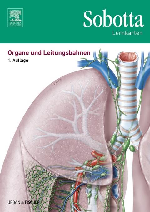 basics anatomie leitungsbahnen