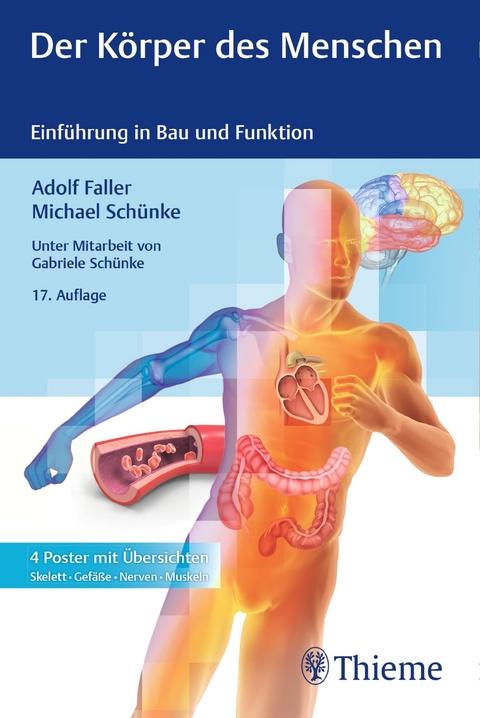 eBook: Der Körper des Menschen von Adolf Faller | ISBN 978-3-13 ...