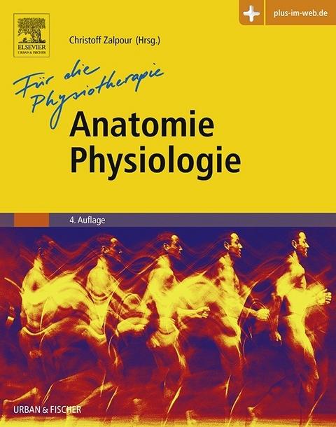 eBook: Anatomie Physiologie für die Physiotherapie von Christoff ...