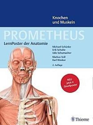 PROMETHEUS LernPoster der Anatomie, Knochen und… von Michael Schünke ...